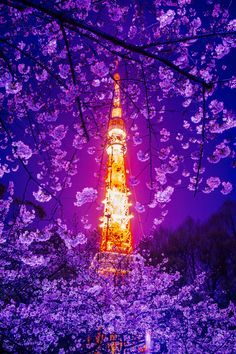 Tokyo Tower with Cherry Blossoms, Japan 桜とタワー