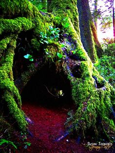 Enchanted Forest Woodland Fine Art Photography by Spinning Castle on Etsy Enchanted Wood, Giant Tree, Big Tree, All Nature, Fairy Land, Fairy Houses, Berg, Pics Art, Faeries