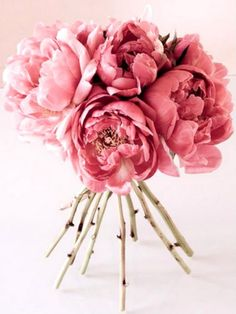 I cant remember how many times I said that these we my favourites; If someone gave me peonies I think I would cry, they are so beautiful.