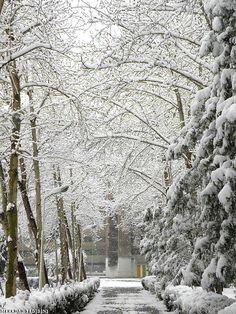 Snow day,Tehran,Iran