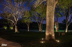 Landcape lighting ideas to enhance the natural beauty of a tree.