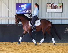 Dressage Pony , Top Der Da , with Krsty Renae Jarvis