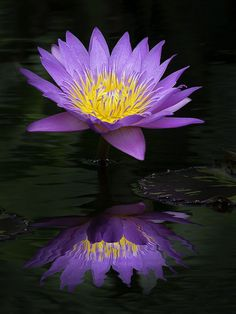 Beautiful!!     Water Lily Refelection, Fairchild Tropical Botanic Garden.