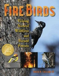 J 634.9 COL. In Fire Birds—Valuing Natural Wildfires and Burned Forests, award-winning science author Sneed B. Collard III challenges society's negative views toward natural forest fires. By focusing on the research of biologist Richard Hutto, Collard reveals the complex relationships between fire and thriving plant and animal communities.