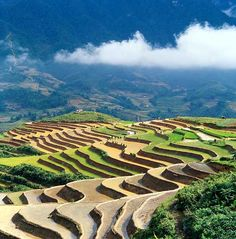 Went to Vietnam, but couldn't get up to Sapa. Would love to go back and see it.