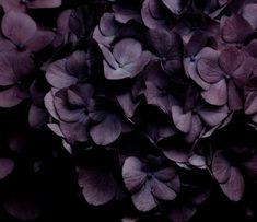 Tumblr Flower Aesthetic, Purple Aesthetic, Aesthetic Dark, Shades Of Purple, Dark Purple, Black Plum, Burgundy, Le Croissant, Color Lavanda