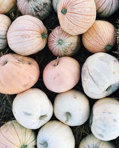 Fall pumpkins. Love this pale color palate.