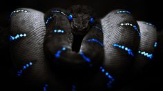 Snake With Blue Eyes Black Background Wallpaper.jpg (1920×1080)