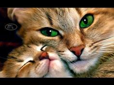 Cats song Lovely cats Happy Cats Singing