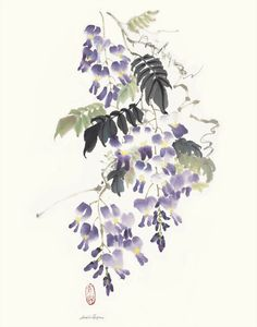 "Wisteria Chinese ink and watercolor on raw rice paper, 24"" x 16"""