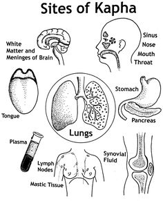 Sites of Kapha subtypes in the body.