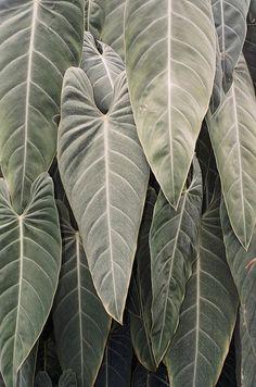 /// leaves
