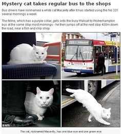 Fish and chips.  Kitteh needs to tell his mommy to drive him. Riding the bus isn't very safe nowadays. ; )