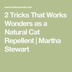 2 Tricks That Works Wonders as a Natural Cat Repellent | Martha Stewart