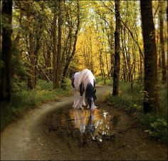horses in the forest | Gypsy Horse in the forest | gypsie horses | Pinterest