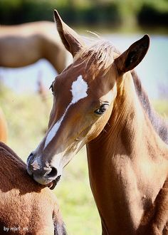 Sweet foal. Please also visit www. JustForYouPropheticArt.com for inspirational art and stories. Thank you so much!