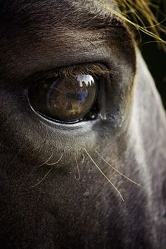 by Ken Gehring - Animals Horses ( reflection, ken gehring photography, arkansas photographer, horse, eyes )