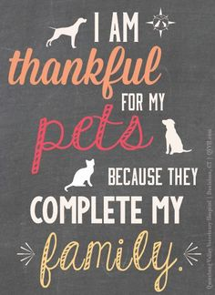 I am thankful for pets because they complete my family. Cat Quotes, Animal Quotes, I Love Dogs, Puppy Love, Diy Pet, Tier Fotos, Quote Posters, Dog Grooming, Grooming Shop