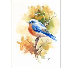Bluebird Original Watercolor Bird Painting 9 x by CMwatercolors