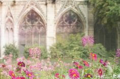 Flowers outside Notre Dame de Paris. Have a look at this photographer's other lovely images at her etsy shop.