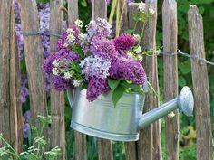 Gießkannen sind ein hübscher Schmuck am Staketenzaun. Gefüllt wird der Vasen-Ersatz mit einem Strauß aus verschiedenen Fliedersorten, kombiniert mit der Knoblauchsrauke (Alliaria)