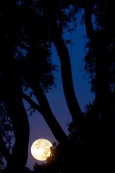 Full Moon on Hilton Head Island, South Carolina; photo by .Jim Crotty
