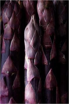asperges violettes. as pretty as a flower and would look fab in an arrangement if a few stalks of this was included.