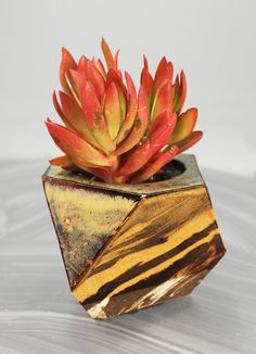 Sculptural Ceramic Planters by Cody Hoyt Growing Succulents, Succulents In Containers, Cacti And Succulents, Wooden Crates Planters, Ceramic Planters, Planter Pots, Hand Built Pottery, Indoor Planters, Garden Gifts
