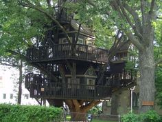 tree house 2.