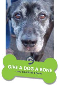 Give a Dog a Bone. and an animal a home is a charity helping to rehome dogs with the elderly. They bring animals and the elderly together. Rehome Dogs, Dog Charities, Old Soul, Charity, Bones, Animals, Animales, Animaux, Animal