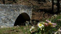 Primevères multicolores près du pont sur le Ri da Riei près de Verscio (Centovalli) (2013-03-31 -34)