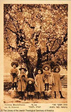 Tu B'Shvat - Children Beneath a Blossoming Almond Tree