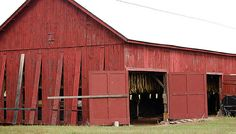 One of the old Double M-B barns back in use for tobacco