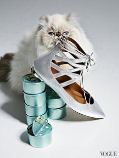 Entre gatos y sandalias   itfashion.com