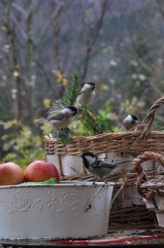 Bratte bakka og grøne lier: Jul in the air... 1