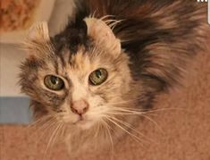 Last night the foster cat I was providing hospice care for went to the Rainbow Bridge. Goodbye beautiful girl. by lesmax cats kitten catsonweb cute adorable funny sleepy animals nature kitty cutie ca
