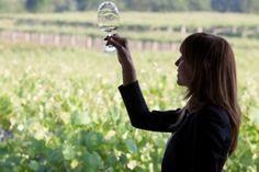 Claves para aprender a reconocer los #vinos blancos
