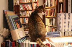 Atlantis Books, Santorini: You'll be torn between observing the various fiction and non-fiction titles in Greek, English, Spanish, Italian, German, French, and Dutch – and noting exceptional little details scattered around the shop. The cats, for example.