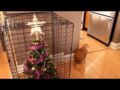 Protect Your Christmas Tree From Your Cat With These 10 Easy Solutions