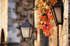 'Wilder Wein' - einfach märchenhaft! #Herbst