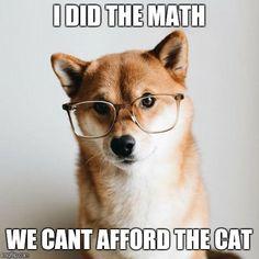 Doge always knows