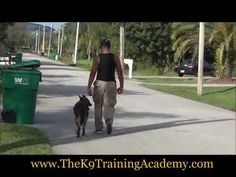 Dog Trainer in Miami Professional dog training in Parkland Florida. Obedience dog training for all breeds of dogs. Puppy Training and off leash training available in Broward county, Palm Beach and Dade county. http://www.thek9trainingacademy.com/Advanced-Dog-Obedience-Training.html