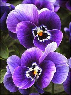Spring Flowers 1 - Diamond Painting Kit - FA1-1151 / 12x16/30x40cm