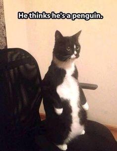 Hoy soy un pingüino