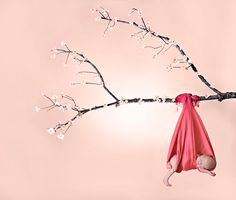 baby hanging from tree