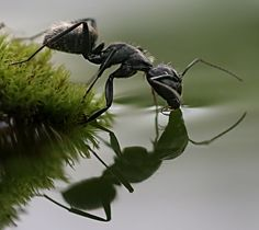incredible when we think that the simplest action is shared with most all living things... #Ants