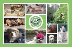 Animals Inc: Pet sitting and dog walking service based in Epsom