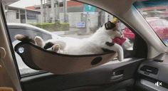 車内に用意されたネコ専用スペース。まんざらでもなさそうw:ぁゃιぃ(*゚ー゚)NEWS 2nd