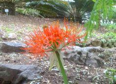 At Kirstenbosch