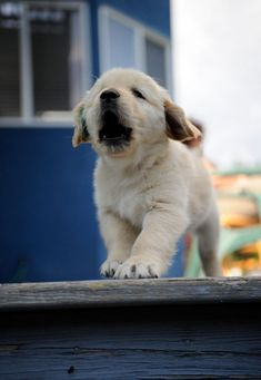 Small barks :: puppy